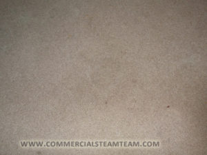 Commercial Steam Team's Carpet Cleaning Services