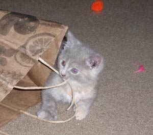 kitty sm